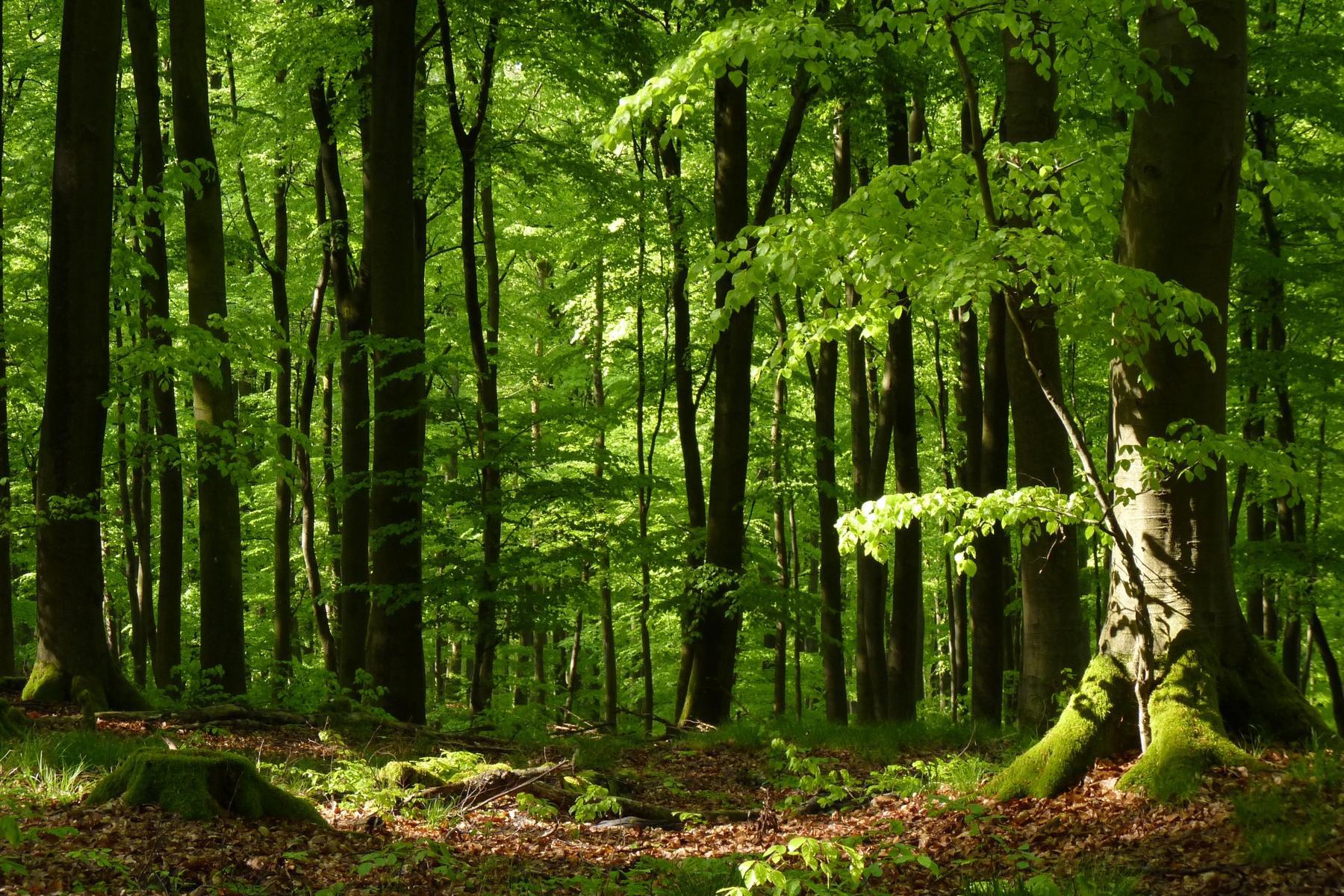 Bilder Vom Wald : umweltministerium nrw wald und klima ~ Yasmunasinghe.com Haus und Dekorationen